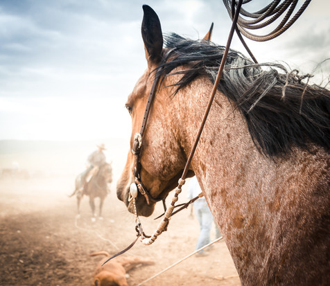 From a Buckskin's View