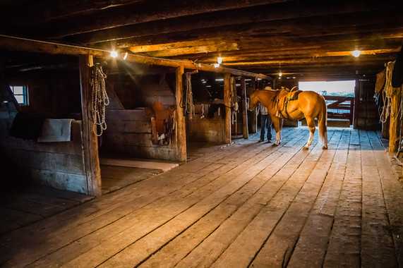 100 yr old horse barn