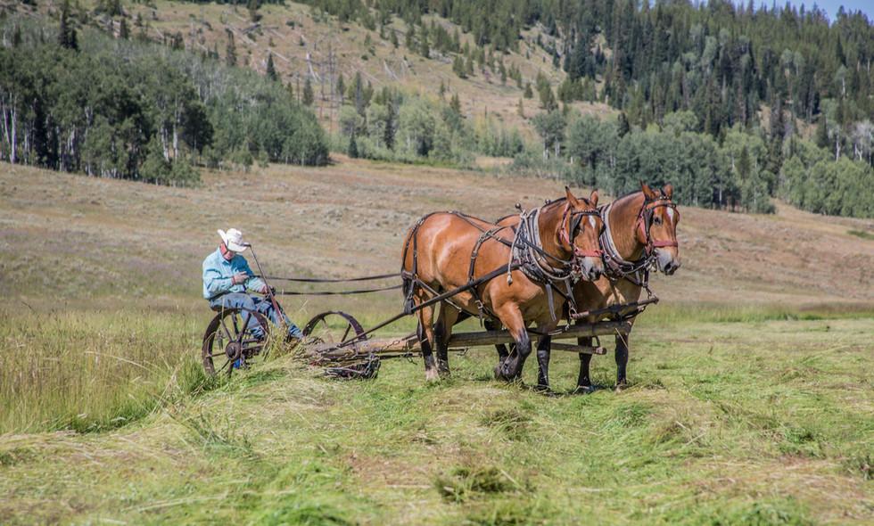 August Plowing