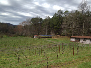VINEYARD SOLAR ARRAY