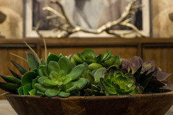 Haven Home Style home succulants decor showroom in Bend Oregon