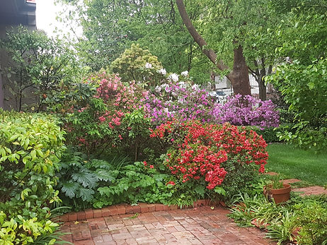 the sustainable gardener  NDIS supplier supporter provider garden maintenance a social enterprise employing people living with disabilities and registered NDIS service provider canberra act disability provider
