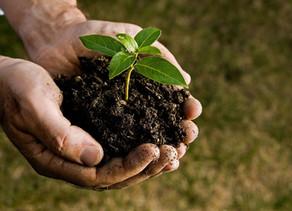 Gostaria de tornar sua empresa mais verde? Conheça a Neutralização de Carbono!