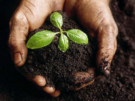 Já pensou em se tornar uma empresa ecologicamente correta?
