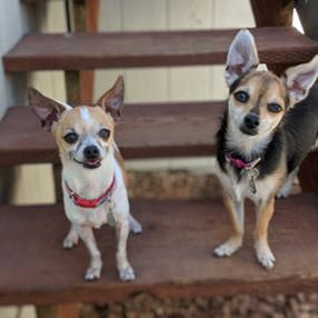 Kringle and Daisy