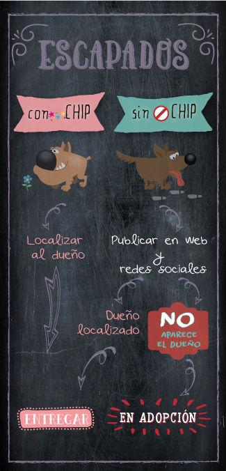 animales escapados en Tarazona (Zaragoza)