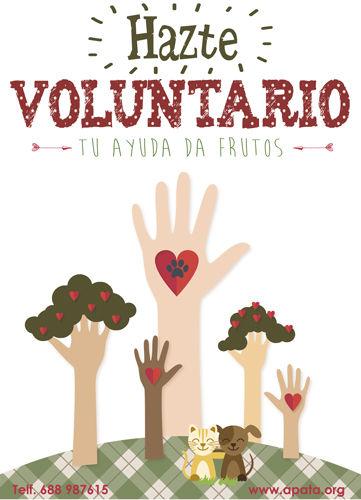Hazte voluntario de la protectora de animales de Tarazona (Zaragoza)
