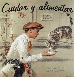 Cuidar y alimentar a los perros y gatos de la Protectora de animales de Tarazona (Zaragoza)