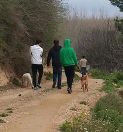 Manada de paseo