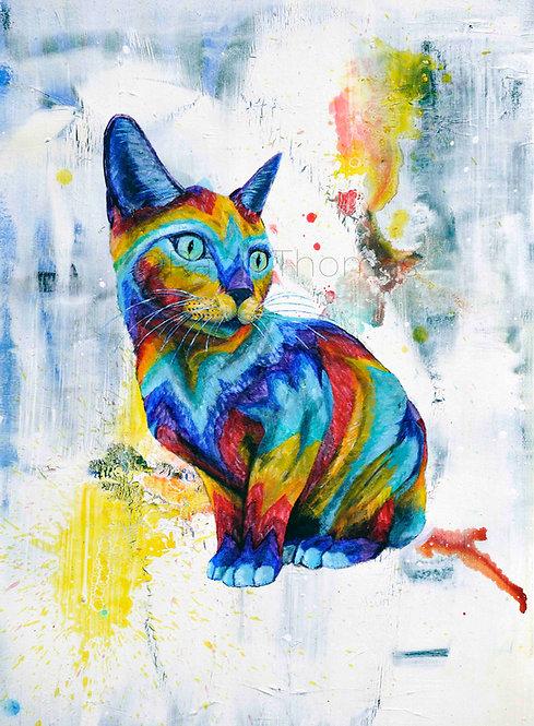 Wonder Cat