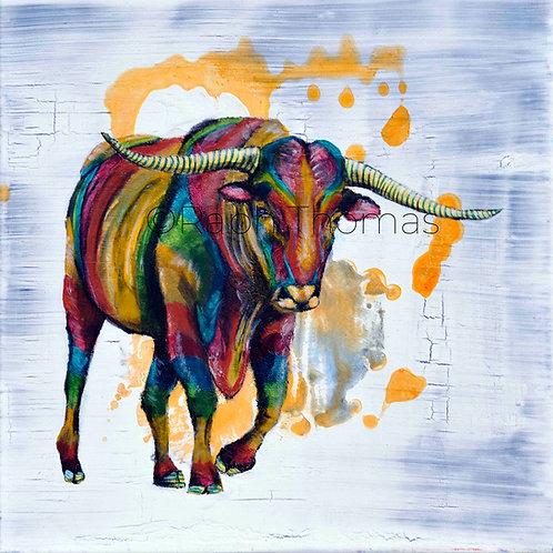 Rainbow Bull 1