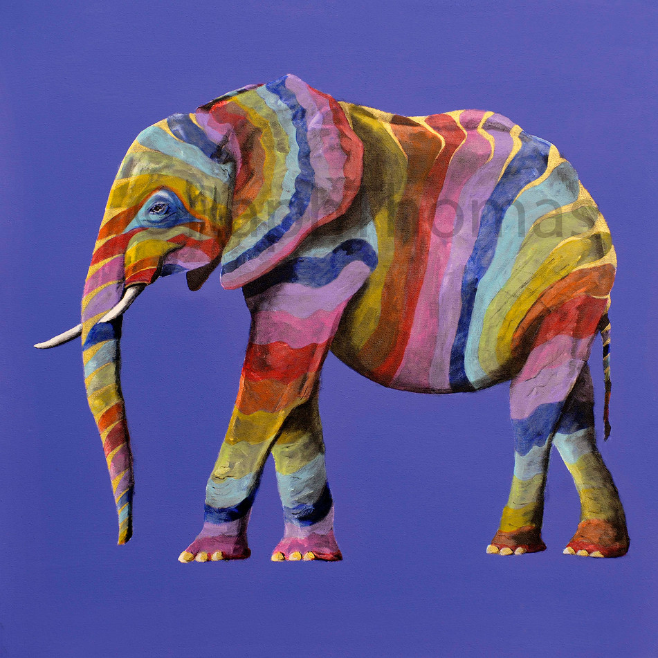 Rainbow Elephant 9
