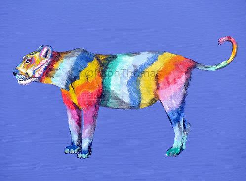 Rainbow Lioness 1