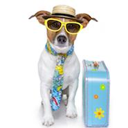 Dog dressed as a tourist