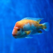 Bright fish swimming