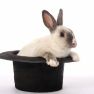 Rabbit coming out of a black top hat