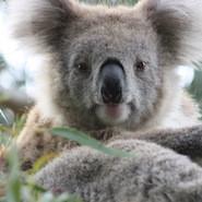 Studying Law in Regional Australia