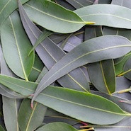 Gum plants