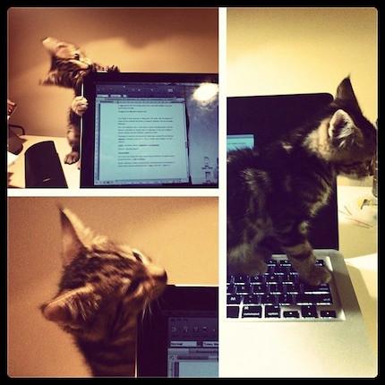 kitten attacking laptop