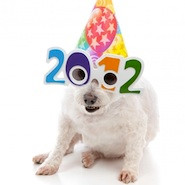 Dog in party hat and 2012 glasses
