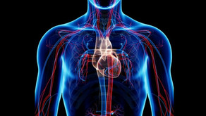 Why is cardiovascular health important?