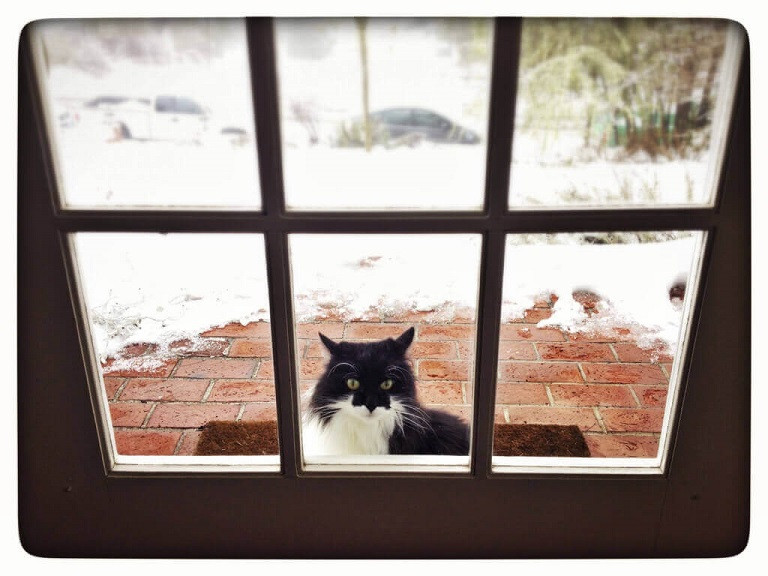 Black and white cat outside a door in the snow.