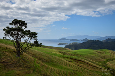 NZ 00005.jpg