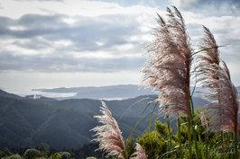 NZ 00009.jpg