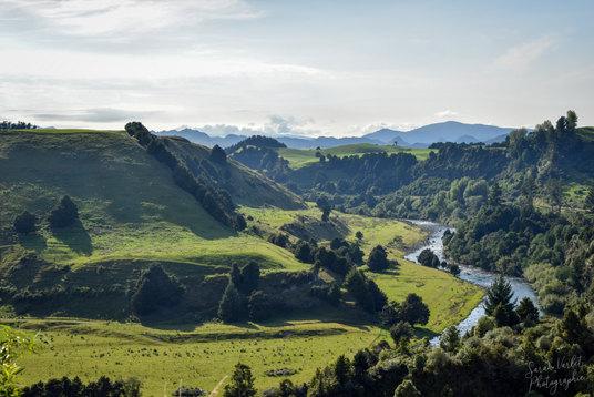NZ 00035.jpg