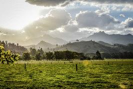 NZ 00018.jpg