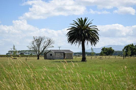 NZ 00004.jpg