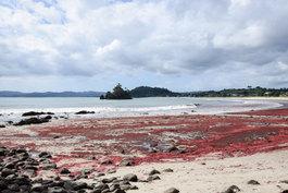 NZ 00016.jpg