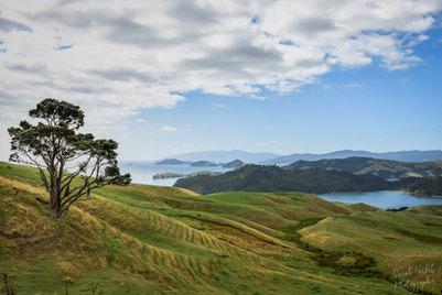NZ 00006.jpg
