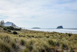 NZ 00022.jpg