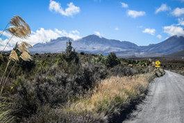 NZ 00031.jpg