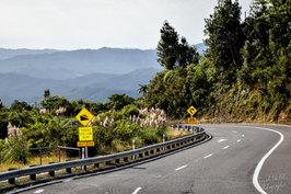NZ 00010.jpg