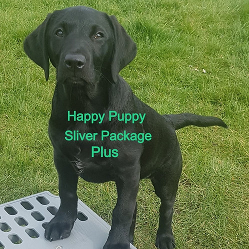 Puppy Training Silver Package Plus
