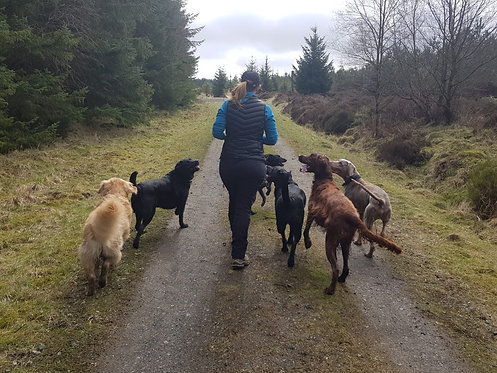 Dog Training Walk