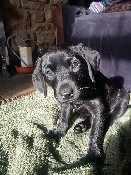 Happy Puppy Training Class -Inside October
