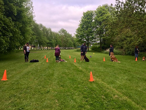 Wednesday Happy Dog Life Skills and Manners Training Class