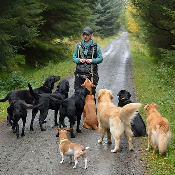 Jenny with group of dog walking dogs