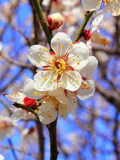 Poesia da natureza - As flores e os signos Série Homenagens