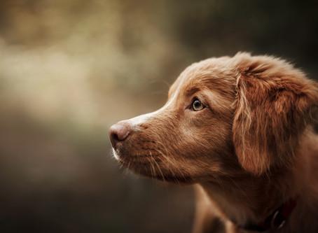 Neue Starttermine für Bester Hund Lernkonzept 2020