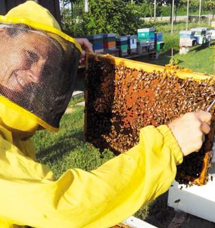 ENZA TECCHIO La donna che sussurra alle api