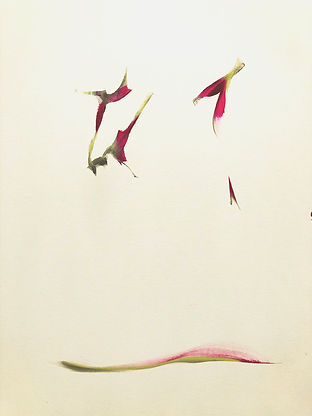 Joanne Tarlin Falling 1 watercolor on pa