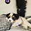 Thumbnail: Waylon - Male | 8-Weeks Old | Yorkiechon