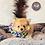 Thumbnail: Macho - Male | 8-Weeks Old | Pomeranian