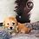 Thumbnail: Kodac - Male | 8-Weeks Old | Biton