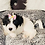 Thumbnail: Zuri - Female | 8-Weeks Old | Yorkiechon