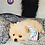 Thumbnail: Nugget - Male | 8-Weeks Old | Pomeranian
